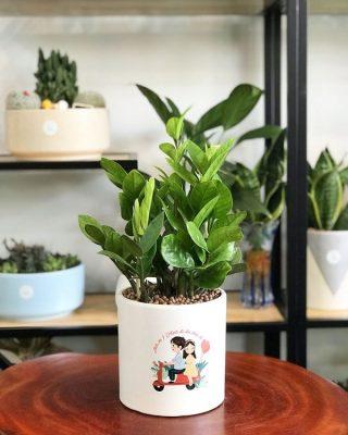 Top 10 loại cây trồng trong nhà không cần ánh sáng hút phong thuỷ và tài lộc